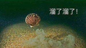 """央视财经记者登上獐子岛捕捞船,""""集体暴毙""""的扇贝到底还活着多少?"""