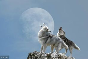 狼的信仰,你值得拥有!