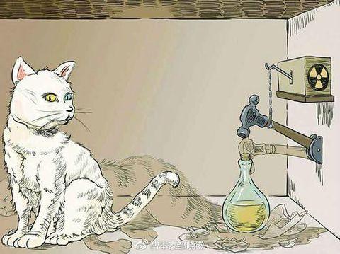 """如何理解""""薛定谔的猫""""?"""