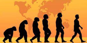 你真的了解进化论吗?科学家盘点了进化论中存在的12个误区