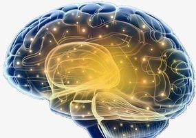 跨物种脑-脑连接!听障人士通过豚鼠大脑听到了声音